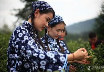 中国绿茶及其特性|中国茶叶知识