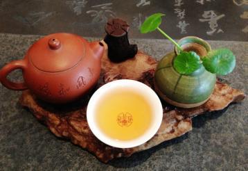 武夷岩茶四大名丛之白鸡冠品鉴|何文明