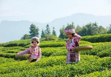 名优绿茶的贮藏方法