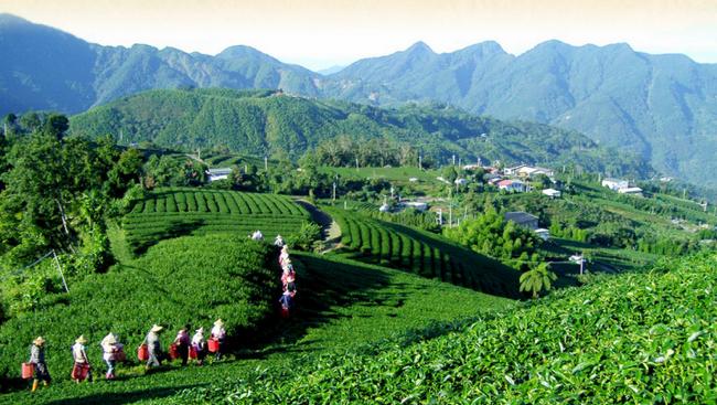 台湾乌龙茶 存储方法