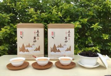 姜花香单丛 凤凰单枞茶