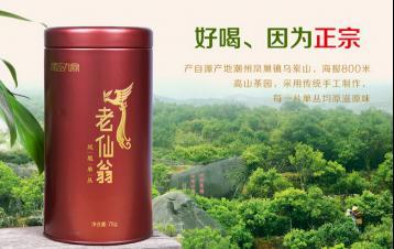 老仙翁单丛|凤凰单枞茶