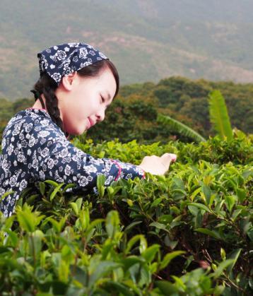 普洱茶保存的三大要点