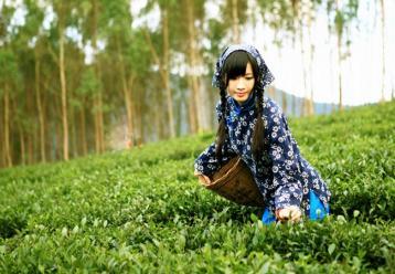 在北方如何保存普洱茶
