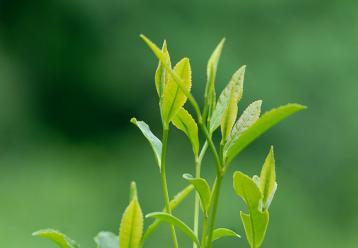 茶叶标准体系总目录