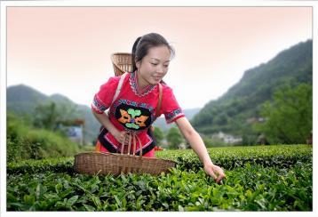 产品标准内容|茶叶国家标准