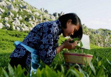 茶叶国家标准:方法标准项目