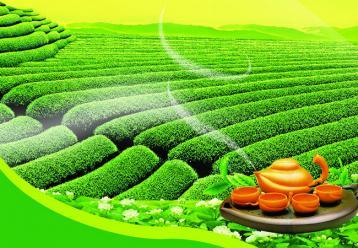 遵义:湄潭县发挥茶产业五大优势助脱贫