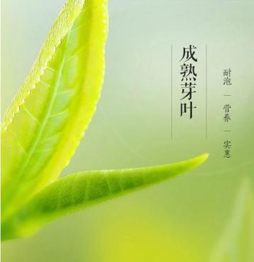岳西绿茶产业发展项目签约仪式举行