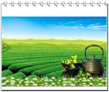 茶叶提香机【专利】