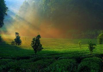 降低茶叶铅含量的土壤改良剂及方法