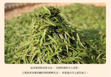 纯手工黄茶制作工艺图|黄茶制作图