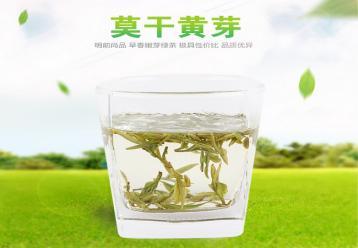 莫干黄芽黄茶冲泡展示图片|黄茶图片