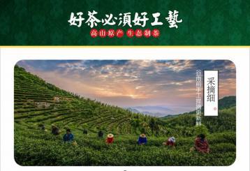 霍山黄芽制作图|黄茶制作图