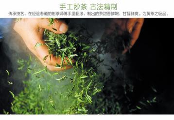 黄茶制作:手工炒茶图|黄茶图片