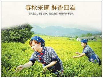 中国茶叶类别|中国茶叶品种