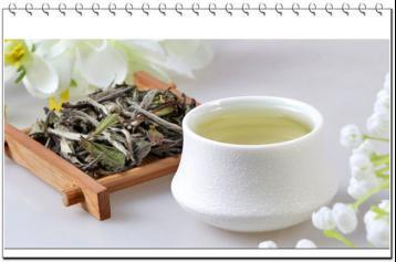 白茶概述|茶叶的种类