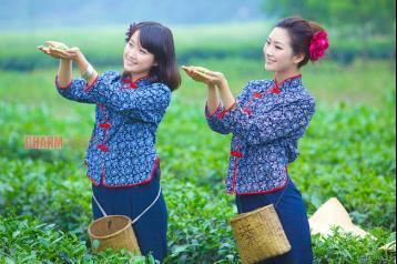 茶叶分类 茶叶种类
