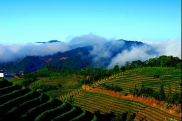 云南茶叶种类|中国茶叶