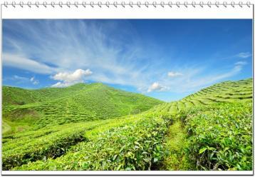台湾乌龙茶的种类