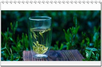 安吉白茶的历史与传说