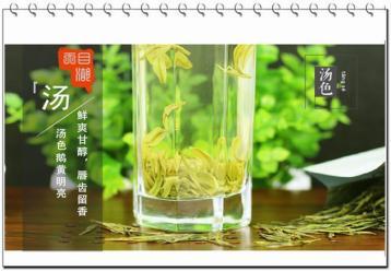 溧阳白茶的历史或典故