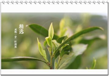 溧阳白茶的营养和药用价值