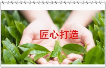 白茶贡眉的特色与制法