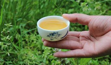 白牡丹茶的药用价值以及饮用禁忌