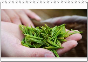 广东大叶青新茶如何保存