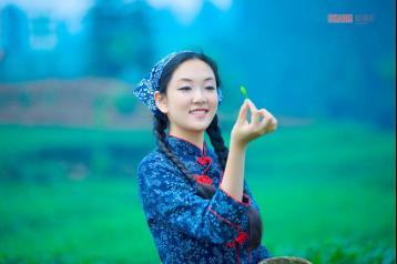 皖西黄大茶与广东大叶青的区别