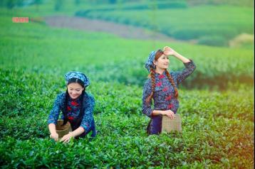 庐山云雾茶属于什么茶