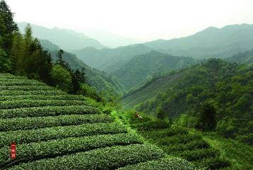 安化黑茶如何分类 它们之间有何区别