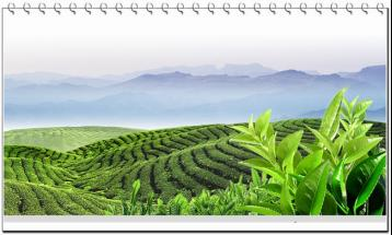 陕西茯茶起源、特点、文化故事