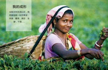 锡兰红茶价格|进口锡兰红茶价格