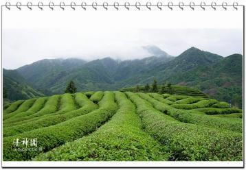 武夷岩茶半天腰价格