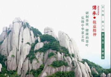 2016最新品牌福鼎大白茶价格表