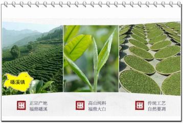 奇蘭老白茶价格|万氏留香正宗福鼎白茶