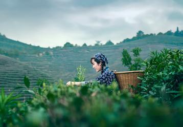 如何卖茶叶?卖茶叶的技巧有哪些?