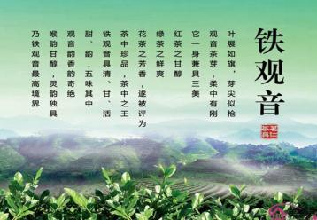 铁观音茶宣传设计图