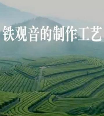 安溪铁观音制作工艺介绍|铁观音视频