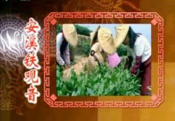 中国名茶【安溪铁观音】|中国茶文化