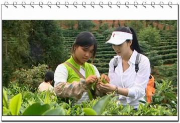 中国茶叶宣传片|普洱茶广告视频