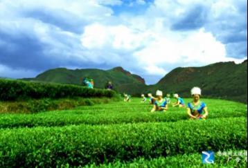 岳西翠兰茶叶宣传片