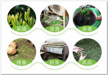绿茶制作过程图解|绿茶制作工艺