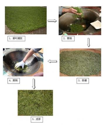 龙井茶手工制作流程图|茶叶加工