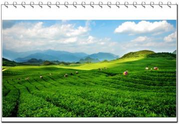 茶山风景图|茶山图片素材