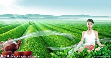茶山背景图|绿色茶园背景