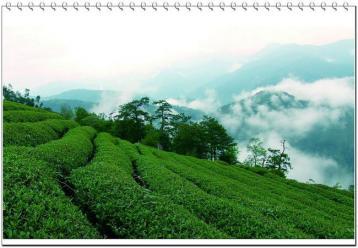 武夷山茶园风光|茶山风景图