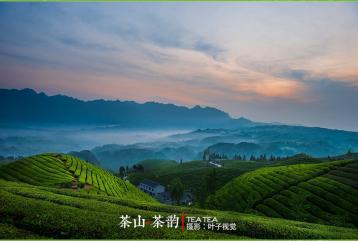 茶山.茶韵(叶子视觉)|茶山摄影